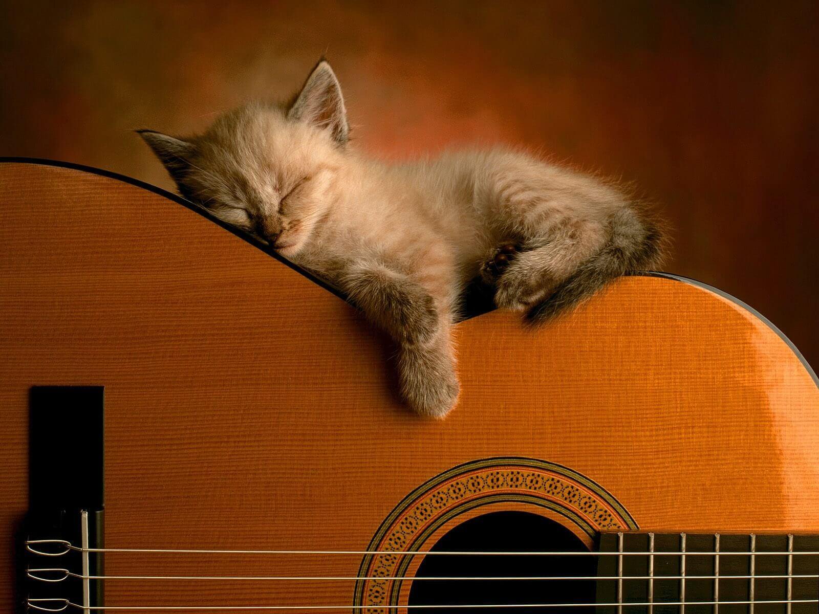 lær at spille guitar